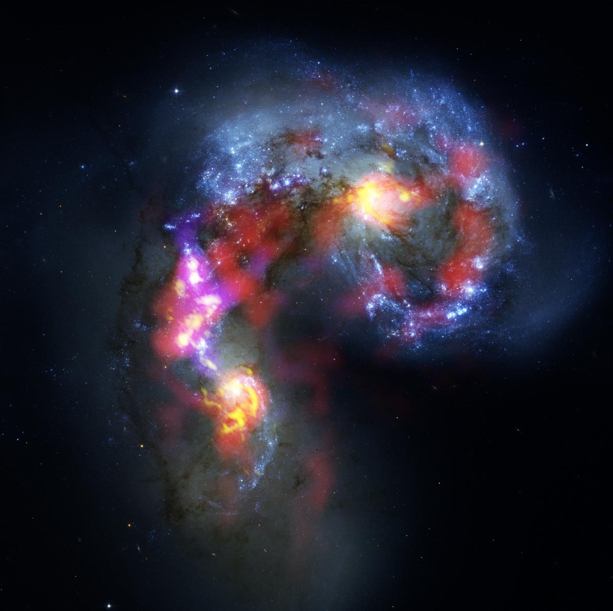 Las galaxias Antena (también conocidas como NGC 4038 y 4039) son un dúo de galaxias espiral en colisión y con formas distorsionadas que están a unos 70 millones de años-luz de distancia, en la constelación de Corvus (el Cuervo). Esta imagen combina observaciones realizadas por ALMA durante la etapa de pruebas y observaciones en longitudes de onda de luz visible hechas con el telescopio espacial Hubble de la NASA y ESA. La imagen del Hubble es la más precisa que se haya captado de este objeto y sirve de referencia en términos de resolución. ALMA realiza observaciones en longitudes de onda mucho más largas, con lo cual es más difícil obtener imágenes tan nítidas. Sin embargo, cuando el conjunto de ALMA esté construido, su capacidad de resolución será diez veces superior a la del Hubble. La mayor parte de las observaciones de prueba de ALMA usadas para crear esta imagen se hicieron utilizadando solo doce antenas -menos de las que se usarán para las primeras observaciones científicas- y con separaciones mucho menores entre ellas, por lo cual no es más que un atisbo de lo que está por venir. A medida que el observatorio crezca y se vayan incorporando nuevas antenas, aumentará exponencialmente la precisión, eficiencia y calidad de sus observaciones. Aun así, esta es la mejor imagen que se haya obtenido de las galaxias Antena en ondas submilimétricas, lo que marca un hito en la exploración del Universo submilimétrico. Mientras que la observación en luz visible (representada principalmente en azul en esta imagen) permite detectar estrellas recién formadas en las galaxias, ALMA revela objetos imposible de observar en esa longitud de onda, como lo son las densas nubes de gas frío donde se forman las estrellas. Las observaciones de ALMA (representadas aquí en rojo, rosado y amarillo) se realizaron en longitudes de onda milimétricas y submilimétricas específicas para detectar la presencia de moléculas de monóxido de carbono en nubes de hidrógeno -invisibles en otras longitudes 
