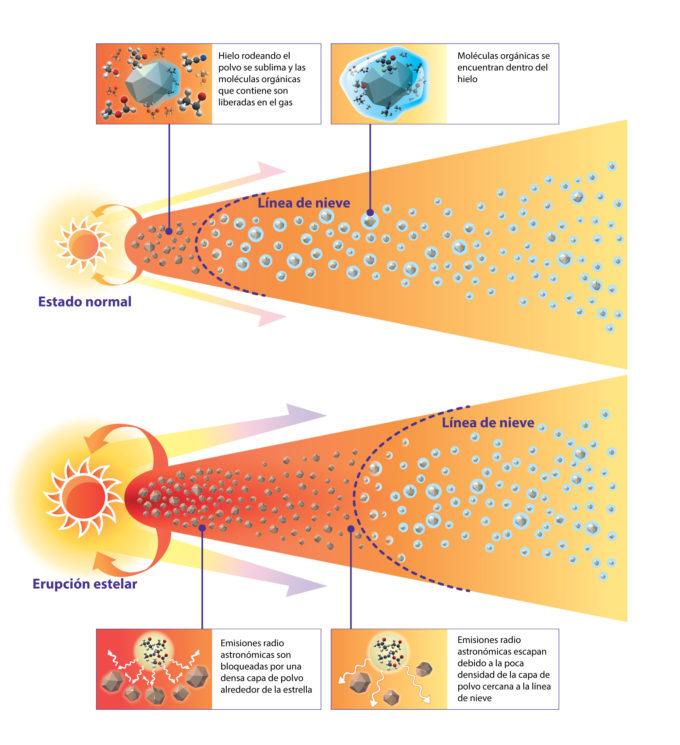 Esquema de la composición de los discos protoplanetarios en estado normal y en fase de erupción. V883 Ori está experimentando una erupción de tipo FU Orionis y el aumento de la temperatura del disco empuja la línea de nieve hacia el exterior, lo que hace que varias moléculas contenidas en el hielo se liberen en el gas. Crédito: Observatorio Astronómico Nacional de Japón.